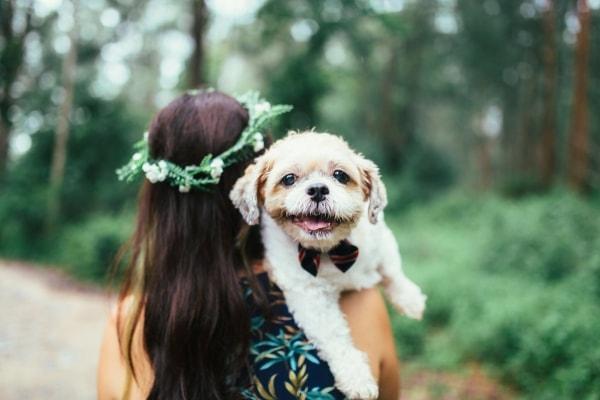 Shih Tzu Pooty Dog Of Pet Parent Elaine Pawshake